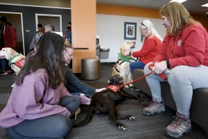 Therapy dogs help students de-stress at the Mount's Kaplan Family Library and Learning Center